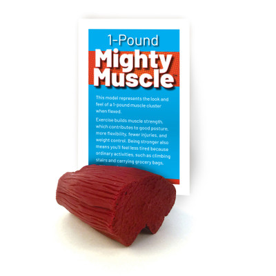 mighty muscle model, 1 pound