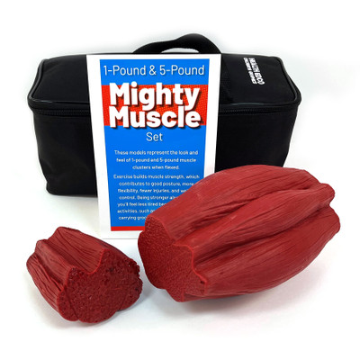 Might Muscle Set, 1 lb and 5 lb by Health Edco for health education, realistic-feeling models of muscle while flexed, 26023