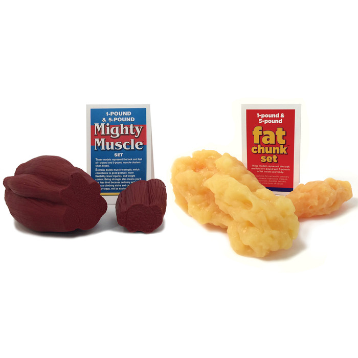 Fat Chunks and Mighty Muscle Set, health education model set, Health Edco physical education materials and models, 26025