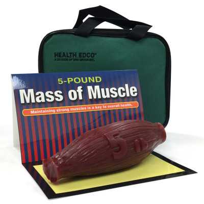 mass of muscle model, 5 pound