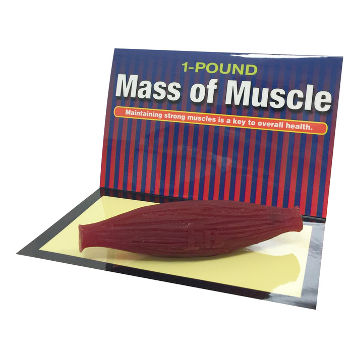 Mass of Muscle 1 pound model for health education, muscle at rest, physical activity education resources, Health Edco, 26037