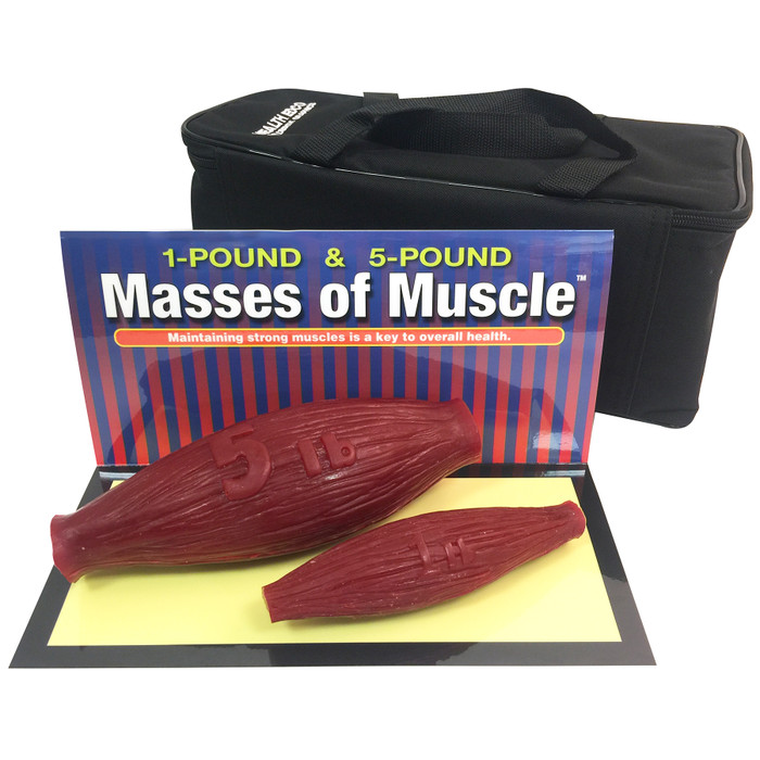 masses of muscle model set, look and feel of 1 and 5 pound muscles at rest, Health Edco, 26038
