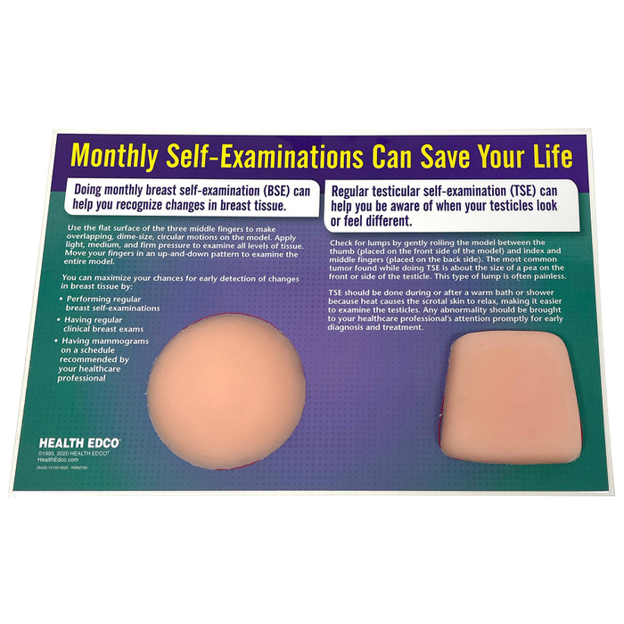 nonsexual breast self-examination, testicular self-examination, simulated tissue, generic shapes, contain palpable lumps, side view shows easel, Health Edco, 26420