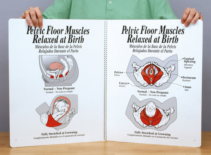 Role of Pelvic Floor Muscles Charts, bilingual spiral-bound 2-color illustrated muscles relaxed at birth, Childbirth Graphics, 43306