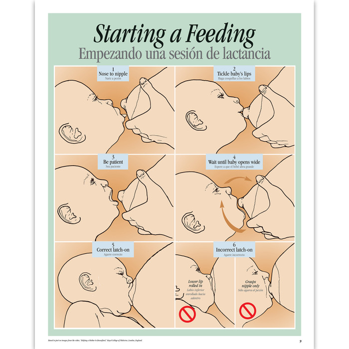 Breastfeeding Basics illustrated English/Spanish spiral-bound chart 6 steps starting a feeding, Childbirth Graphics, 43308