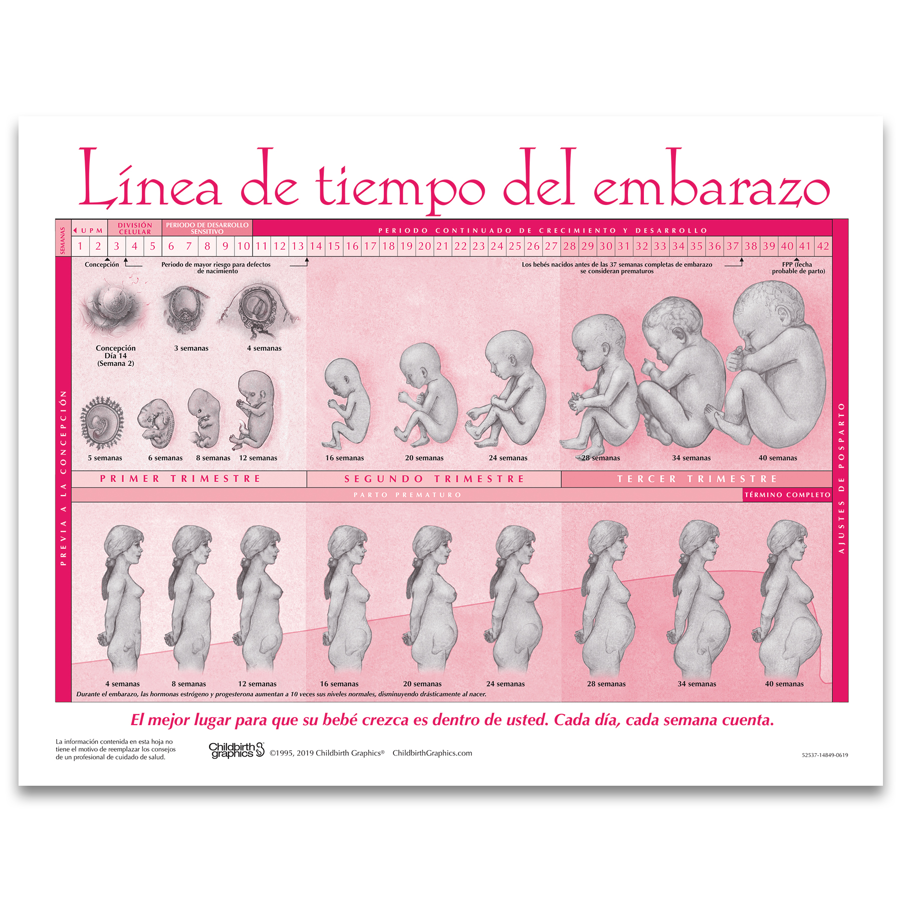 Timeline Of Pregnancy Tear Pad Spanish Childbirth Graphics