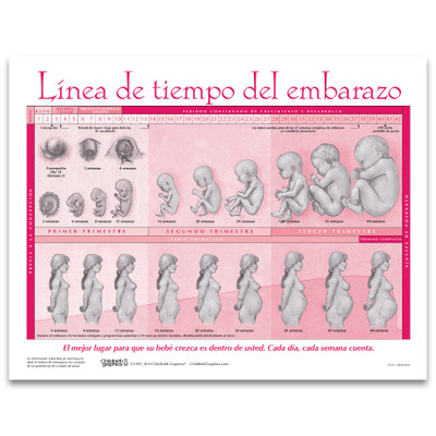 Timeline of Pregnancy 2-color illustrated tear pad Spanish, fetal development pregnant torso, Childbirth Graphics, 52537
