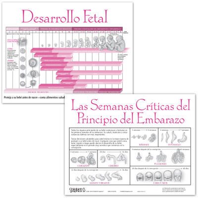 Fetal Development 2-color illustrated tear pad Spanish, developmental timeline, Childbirth Graphics, 52562