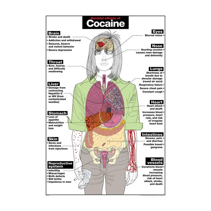 Harmful Effects Of Cocaine Chart Health Edco