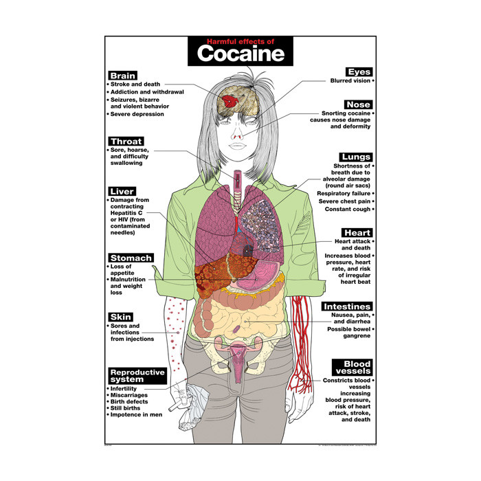 Harmful Effects of Cocaine Chart, illustrated anatomical chart with impact on organs, Health Edco, 70075