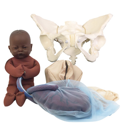Deluxe Flexible Pelvis Model Set for Childbirth Education with dark brown skin tone Fetal Model, Childbirth Graphics, 78017