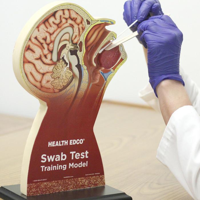 Swab Test Training Model for healthcare training by Health Edco, model used to demonstrate throat swab testing, 78034
