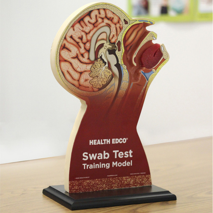 Swab Test Training Model for healthcare training from Health Edco to teach nasopharyngeal and throat swab testing, 78034