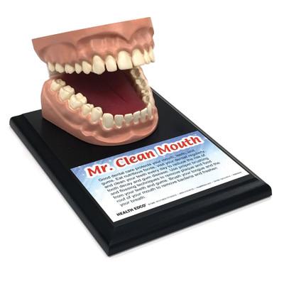 Oral Health Education Materials & Models | Health Edco
