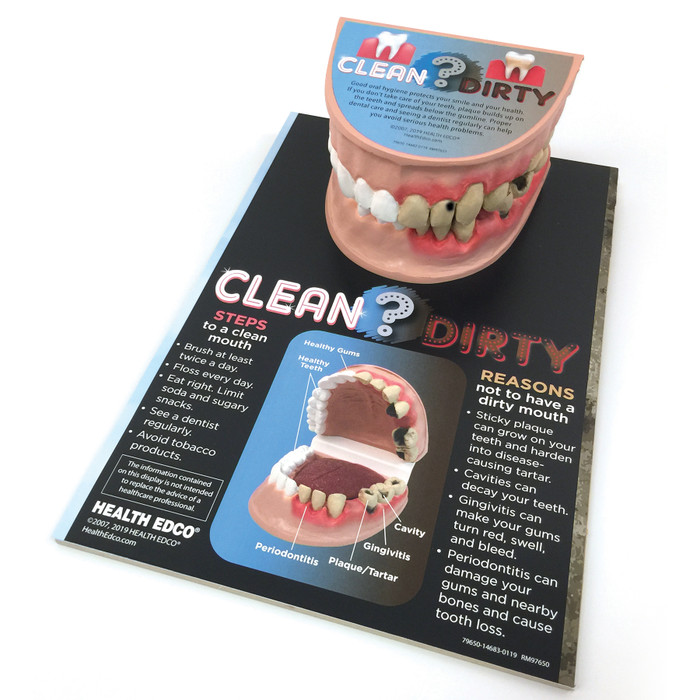 Clean Mouth Dirty Mouth Dental Health Education Display with teeth model, oral health education model, Health Edco, 79650