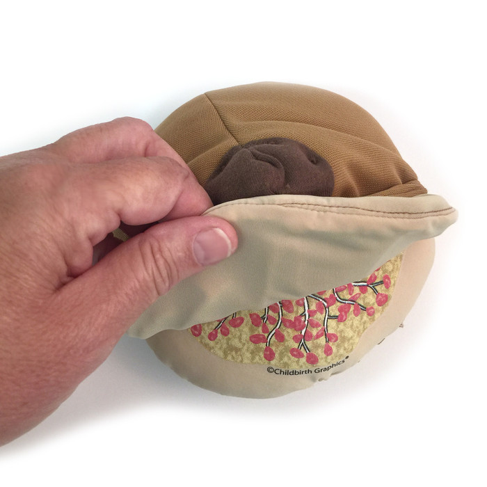 Cloth Breast Model, Brown for breastfeeding education by Childbirth Graphics, peeled back skin to show breast anatomy, 79812