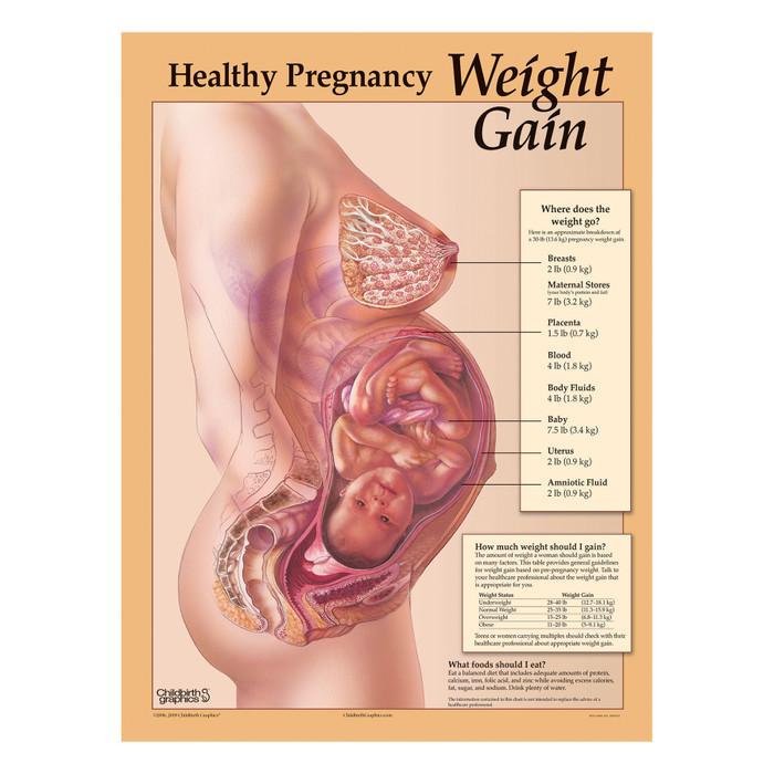 Healthy Pregnancy Weight Gain Chart Childbirth Graphics