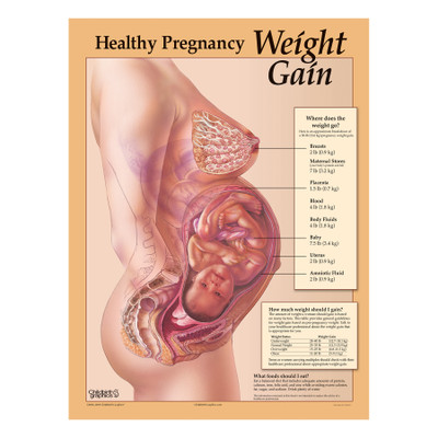 Healthy Pregnancy Weight Gain Chart Childbirth Graphics